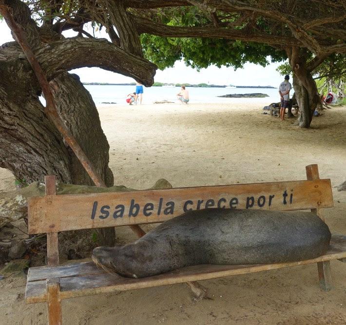 travel-isabela-galapagos-island-budget